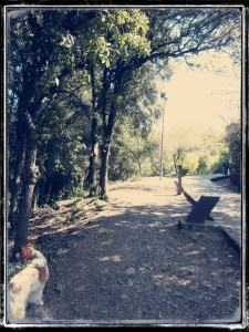 RUTA_VALLVIDRERA_06_PARADA_2.0