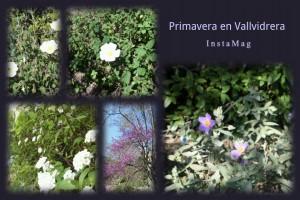 RUTA_VALLVIDRERA_06_PRIMAVERA