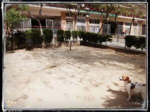 RUTA_09_EL_CLOT_PARADA_PIPI_CAN_1